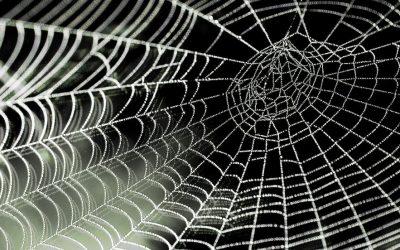 Aus dem Vergleich von Netzwerkstrukturen lernen